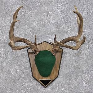 deer plaques patterns pictures to pin on pinterest pinsdaddy With antler plaque template