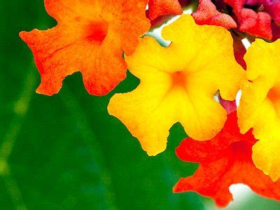 flower oyg jigsaw puzzle jigzonecom