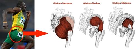 The Importance Of Glute Strength To Running