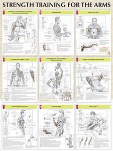 Weight lifting exercises for arms