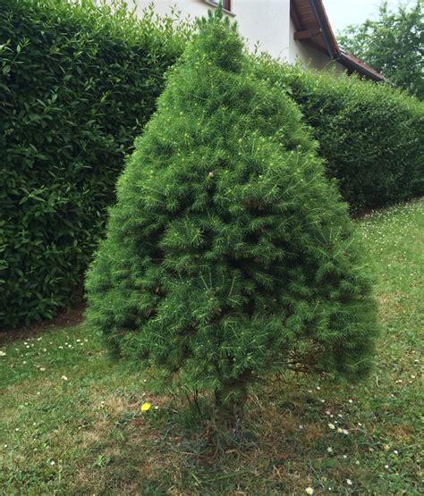 tannenbaum im topf kaufen tannenbaum im topf k nstlicher tannenbaum weihnachtsbaum