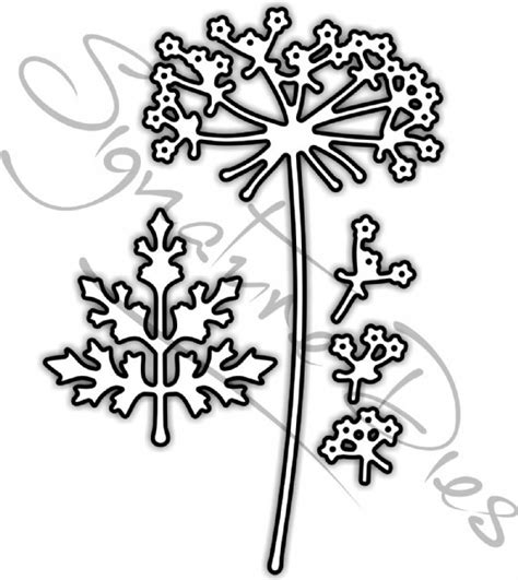 queen annes lace coloring pages coloring pages
