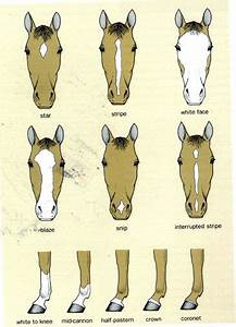 Brown Face Chart Blank 73 Best Images About Horse Lessons On Pinterest Horse