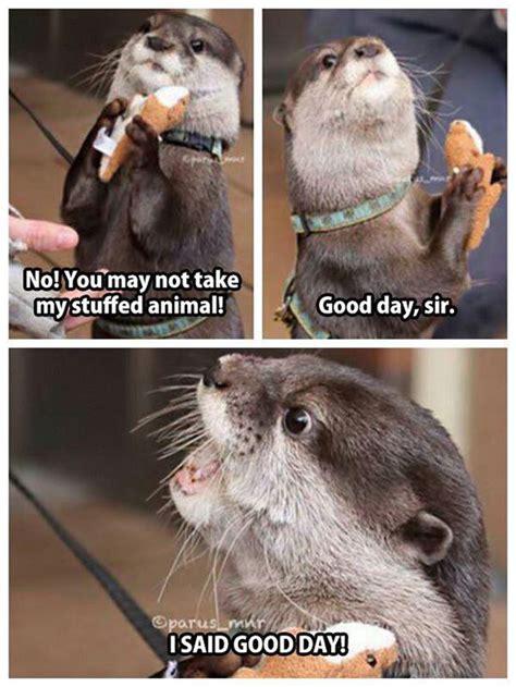 Funny Otter Meme - best 20 otters funny ideas on pinterest