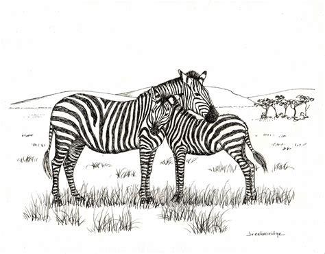 Baby Zebra Sketch Wwwpixsharkcom Images Galleries