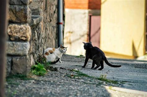 feral cats cat danger stray adorable behavior language body bully dogs alley rid scrum master popovski fix guide coach fighting