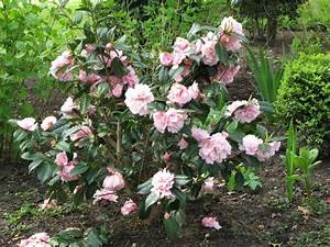 Winterharte Pflanzen Liste : top 25 best winterharte pflanzen ideas on pinterest ~ Michelbontemps.com Haus und Dekorationen