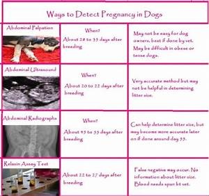 Dog Shots Chart Do Human Pregnancy Tests Work For Dogs Whelping Puppies