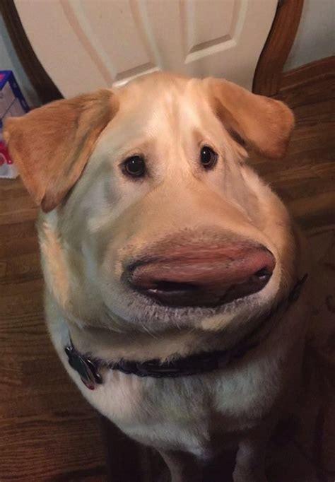 cool snapchat filter    dog