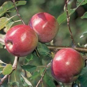MacFree Apple from Stark Bro's | Apple tree, Apple ...