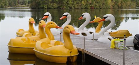 Swan Boats Wareham swan boat rentals offered in wareham ma new