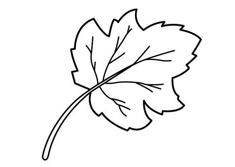 leaf coloring pages for preschool activity shelter 542 | leaf coloring page for children