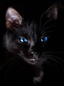 pictures of black cats cat animals cats animal witch darkness