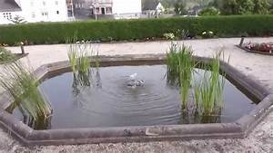 Goldfische Im Teich : goldfische im teich in hd youtube ~ Eleganceandgraceweddings.com Haus und Dekorationen