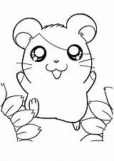 Coloring Pages Hamster Cute Hamtaro Hamsters Colouring Print Animals Amazing Nice Printable Sheets General Comments Cartoon Coloringhome sketch template