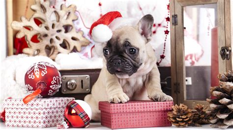 wallpaper puppy cute animals christmas  year