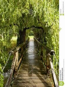 Petit Pont En Bois : petit pont en bois sous le saule v que palace wells photo stock image 45756735 ~ Melissatoandfro.com Idées de Décoration