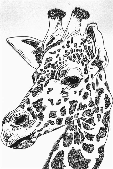 giraffe drawing close  twllllyat