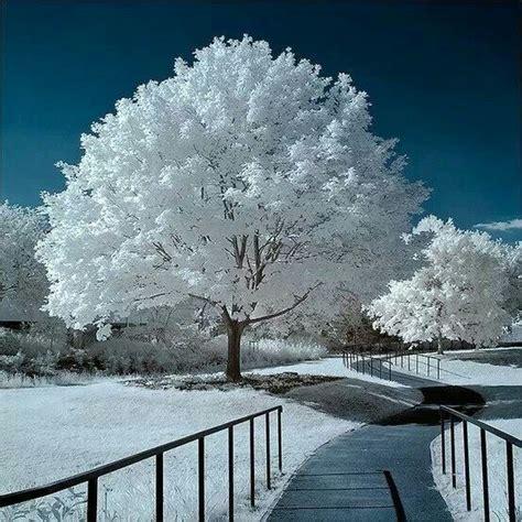 750x1334 beautiful snow green nature nature is amazing white whitecolour amazingwhite