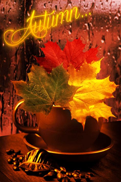 fall rain coffee time pictures   images