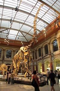 Reiseführer Für Berlin : natural history museum museum f r naturkunde andberlin ~ Jslefanu.com Haus und Dekorationen