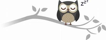 Owl Clipart Sleepy Sleeping Branch Clipground Pngkey