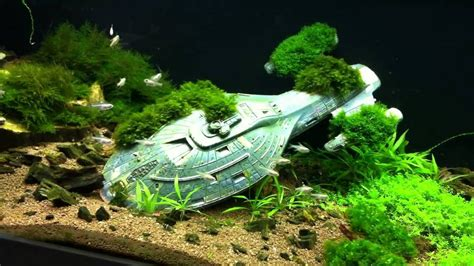 tips to get cool fish tanks