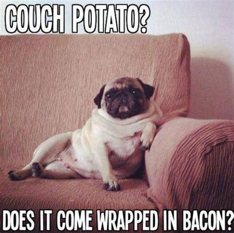 Funny Pug Memes - 183 best images about funny pugs on pinterest pug love fat pug and nom nom