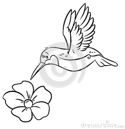 hummingbird  flower coloring pages royalty  stock