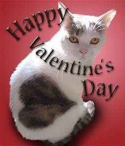 122 best images about Cats With Hearts on Pinterest ...