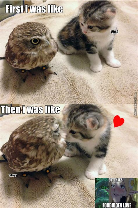 Pussy Cat Meme - bling owl meets pussycat 3 by haters meme center