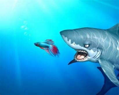 Windows Funny Animals Sea Wild Shark Animales
