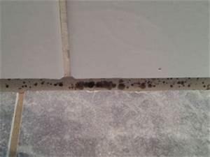 Schimmel Wand Entfernen : schimmel im bad vorbeugen und entfernen ~ Lizthompson.info Haus und Dekorationen