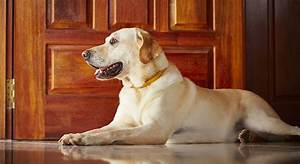 Dog doors the best dog flaps for labs the labrador site for Dog door for labrador