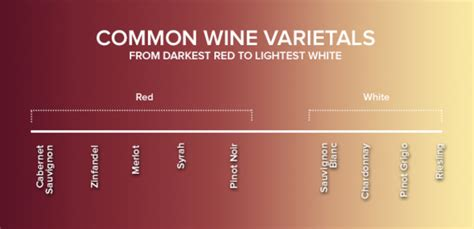 light red wine for beginners getting into wine red vs white and other basics