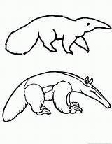 Anteater Template Coloring Printable Sheet 123coloringpages Animal sketch template