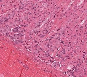 Oral Cavity  Pharynx  Esophagus  And Stomach