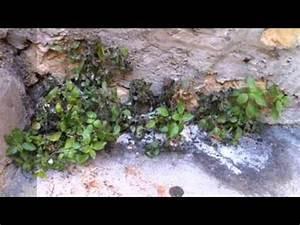 Désherbant Naturel Pour 600m2 : d sherbant naturel et cologique avec du sel youtube ~ Nature-et-papiers.com Idées de Décoration