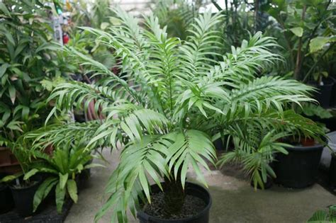 small tropical plants tropical plants rainforest plants that look great in the