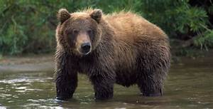 The Good, the Bad, and the Grizzly | Delisting the Grizzly ...  Grizzly