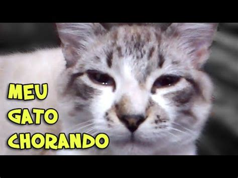 gato chorando cat crying youtube
