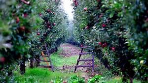Quand Planter Un Pommier : plantation framboisier good ce sera donc la range de ~ Dallasstarsshop.com Idées de Décoration
