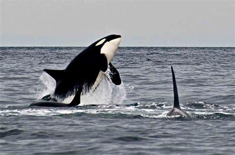 Capt. Jim Maya's Favorite Whale Photos Of 2013