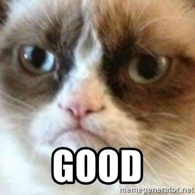 Angry Cat Good Meme - good angry cat www pixshark com images galleries with a bite