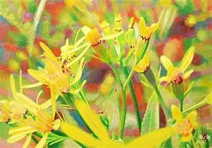 Gemälde In öl : lichtblume 3 harzgreiskrautbl tchen gem lde l und ~ Sanjose-hotels-ca.com Haus und Dekorationen