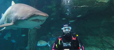 sydney aquarium shark dive book  experience oz
