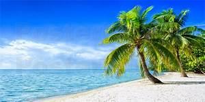 Bilder Von Palmen : jan christopher becke urlaub am strand mit palmen und meer poster online bestellen posterlounge ~ Frokenaadalensverden.com Haus und Dekorationen