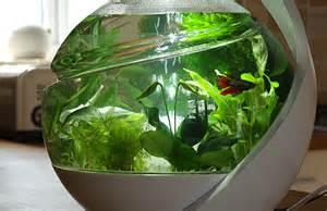 Self-Cleaning Fish Tank Plants