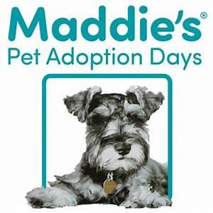 Maddie's Pet Adoption Days | SF SPCA