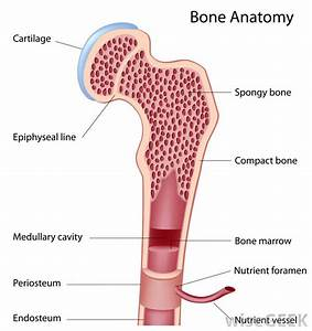 What Is Bone Marrow Edema   With Pictures